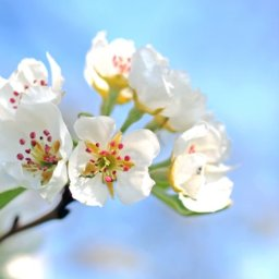 spring-plumbing-checklist
